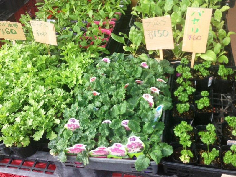 ใบสมุนไพรต่างๆ ที่วางขายอยู่ในตลาดของเกษตรกร Ashikita Sashiki ราคาเพียง 60 เยน