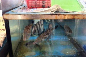 live fish at the fish markets