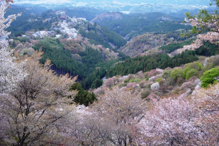 Kunjungan ke Gn. Koya di Yoshino