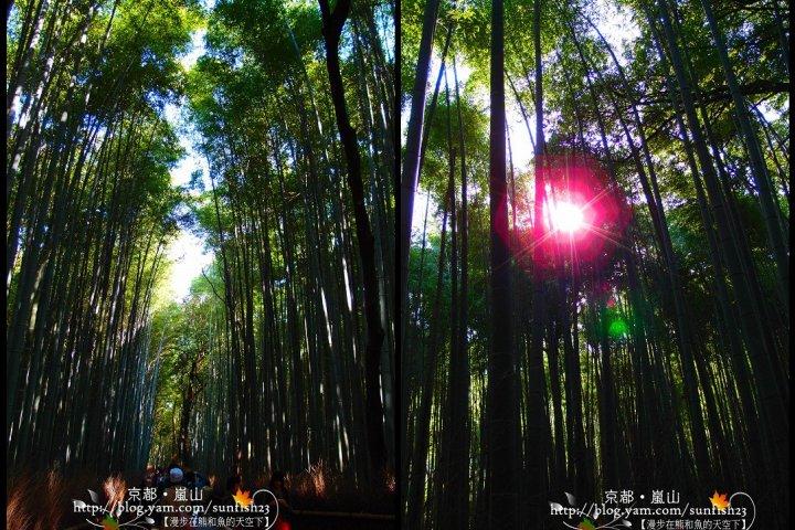 嵐山竹林小徑&野宮神社