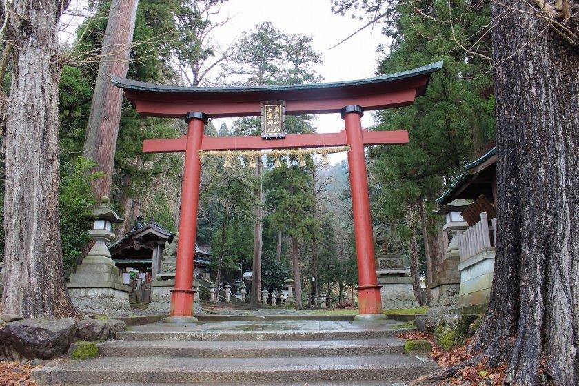 大瀧神社岡太神社の大鳥居。樹齢数百年の杉木立が鬱蒼と茂っている