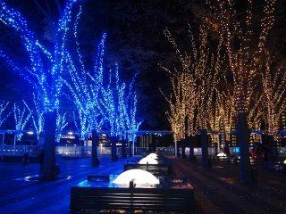 LED 전구들이 거의 모든 나무를 덮고 있다.