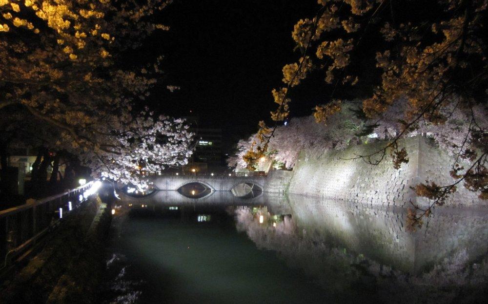 Main bridge to Fukui Castle and cherry blossoms at night
