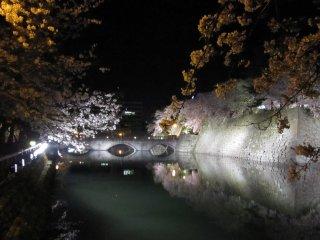 福井城の御本城橋と夜桜