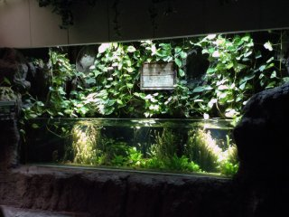 Verdura por cima e dentro da água a que dezenas de pequenos peixes chamam casa