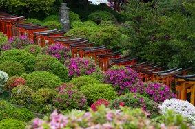 Фестиваль азалий в храме Нэдзу