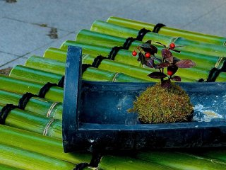 Cute little bonsai on bamboo lid covering a well