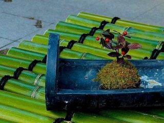 Um pequeno bonsai engraçado numa base de bambu cobrindo um poço