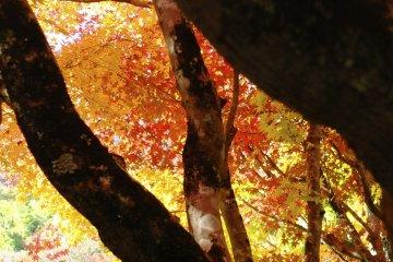 색의  우거진 잎
