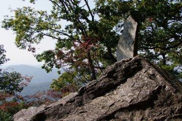 <p>A treasure on the rocks</p>