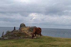 A horse by the shrine and cliff.