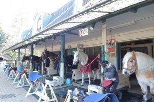 Pony Centerstable