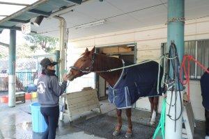 Horse at Pony Center