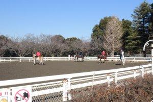 Pony Center