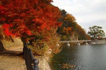 สีสันของฤดูใบไม้ร่วงที่นุโนะบิคิ โกเบ
