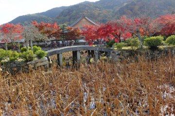 ใบไม้เปลี่ยนสีที่วัดเทนริวจิ