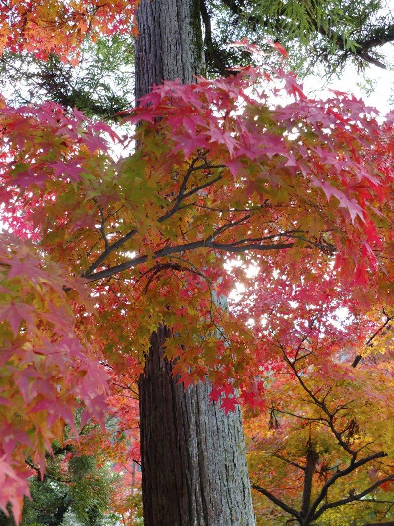 심지어 주차장에 있는 나무들도 아름답다