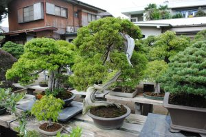 More bonsai from Toju-en
