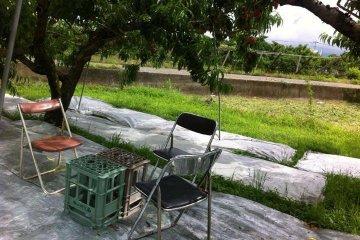 <p>นั่งปอก และทานผลไม้ ใต้ต้นพลับกับครอบครัว</p>