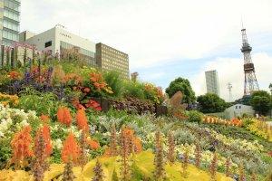 ดอกไม้ในสวนช่วงฤดูร้อน