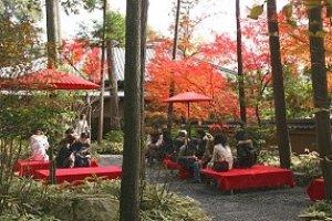 สวนชาภายในคินคะคุจิ