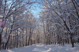 บรรยากาศรอบๆ เกสเฮาส์ ป่าล้อมรอบ ธรรมชาติมาก