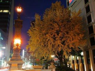 Ánh đèn chiếu sáng Nihonbashi lá hợp với màu sắc cây cối vào mùa thu