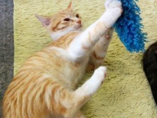 There are many toys used to entertain the cats whichany customer can use. Ask the staff for tips ascertain cats like particular toys.