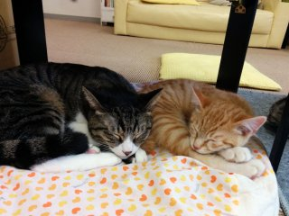 Nap time at the cat cafe.