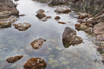 A Solid-Rock Nature Walk