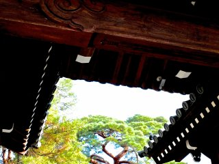 Pine trees in Japan are lovely, and so are temple roof tiles