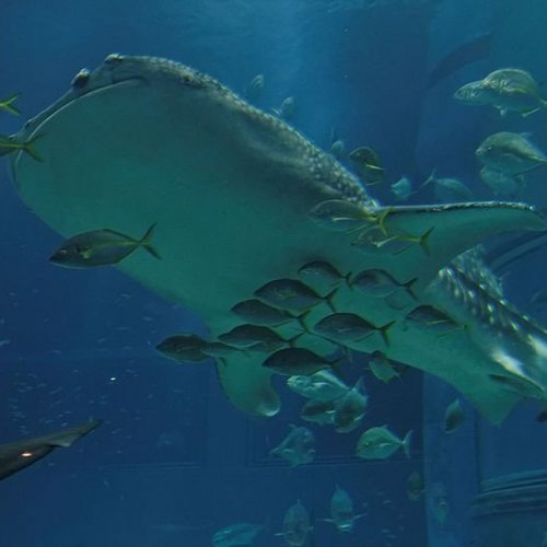 Whale Shark Exhibition