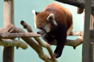 Parc zoologique de Chiba