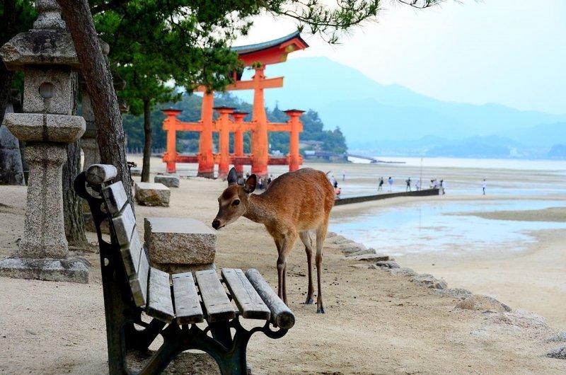 A shrine deer
