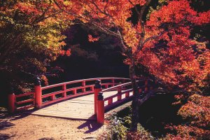 Traditional Japanese bridge in a park full of colorful autumn leaves in Miyajima, Japan.