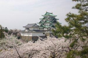 Nagoya castle in spring