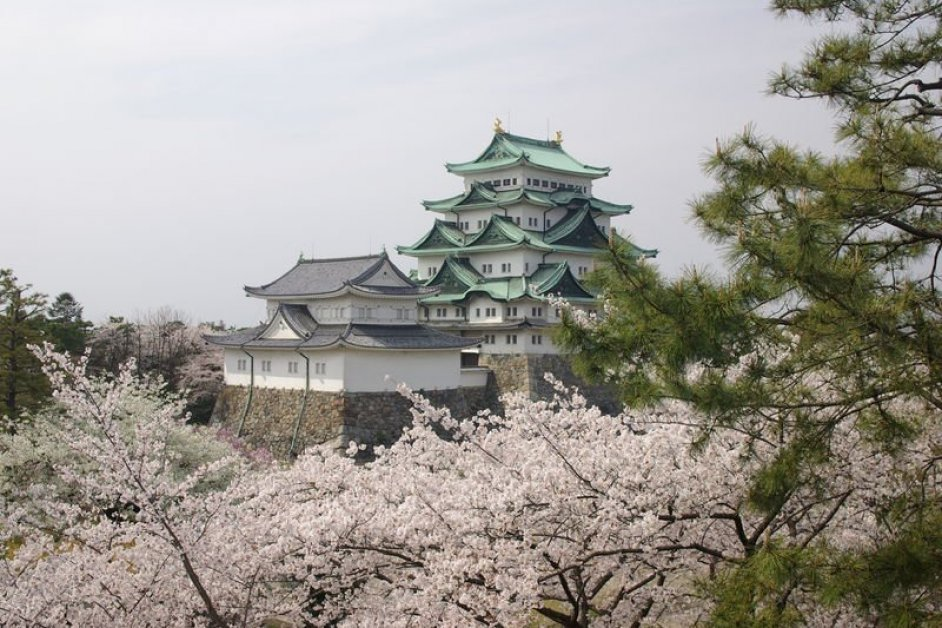 Nagoya castle in spring