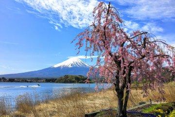 Mount Fuji Bus Tour from Tokyo